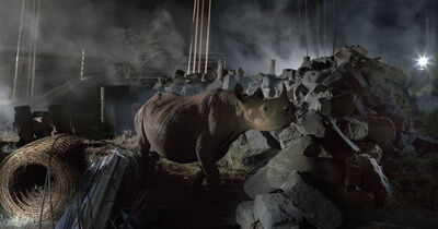 Nick Brandt, 'Construction Site with Rhino ', 2018