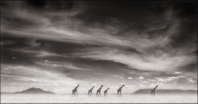 Nick Brandt, 'Giraffes Under Swirling Clouds, Amboseli', 2007