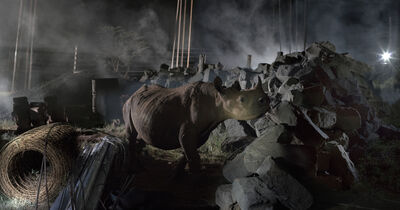 Nick Brandt, 'CONSTRUCTION SITE WITH RHINO', 2018