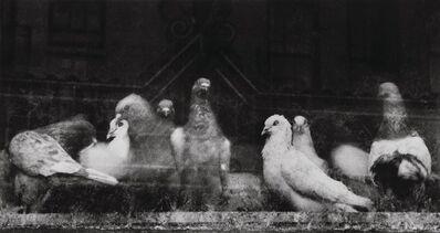 Ruth Bernhard, 'Pigeons', 1956-printed later