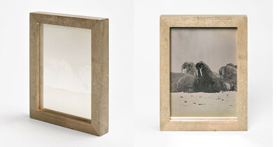 Christina Seely, 'Arctic—Walrus (Odobenus Rosmarus) from the series Species Impact', 2012-2016