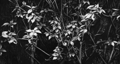 Lu Hui, 'Silent Moon 月无声', 2017