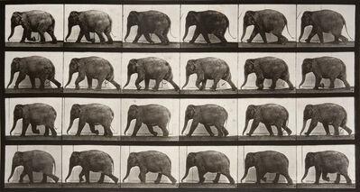 Eadweard Muybridge, 'Animal Locomotion: Plate 733 (Elephant Walking)', 1887