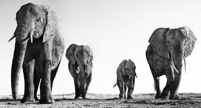 David Yarrow, 'Boy Band', 2014
