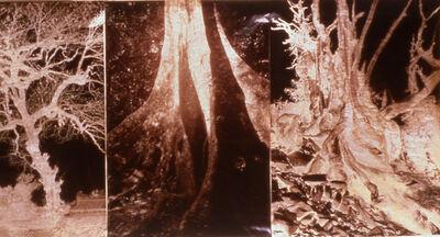 Meridel Rubenstein, 'Brocade', 2000