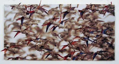 Nicholas Hall, 'Untitled (Birds)', 2013