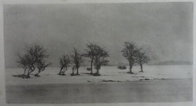 P. H. Emerson, 'Gnarled Thorn Trees', 1895