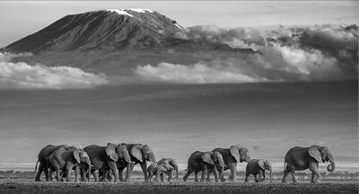 David Yarrow, 'Walk the Line', 2019