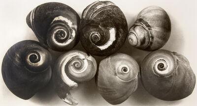 Irving Penn, 'Seven Shells, New York', 2002