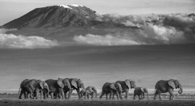 David Yarrow, 'Walk the Line', ca. 2019