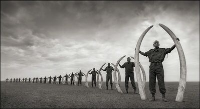 Nick Brandt, 'Rangers (Line Of) With Tusks Of Killed Elephants, Amboseli', 2011