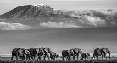 David Yarrow, 'Walk the Line II', 2019