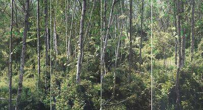 Honggoo Kang, 'Study of Green-White Birch (Ver.2) ', 2015