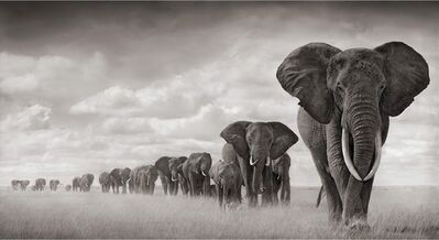 Nick Brandt, 'Elephants Walking Through Grass, Amboseli', 2008