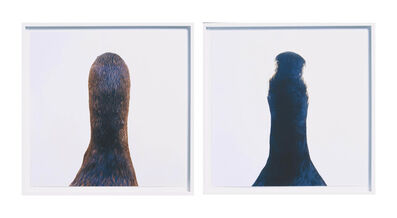 Roni Horn, 'Diptych: Untitled Number 10 (Bird Pair: Cormorant & Goose )', 2000