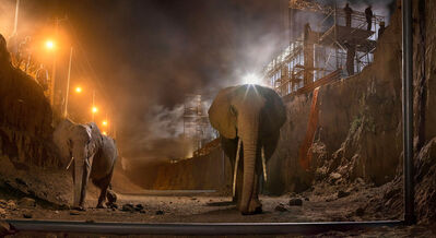 Nick Brandt, 'River Bed with Elephants', 2015