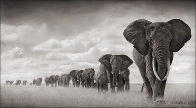 Nick Brandt, 'Elephants Walking through Grass, Amboseli', 2008
