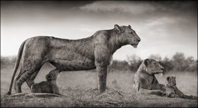 Nick Brandt, 'Lioness With Cub Feeding, Masai Mara', 2007