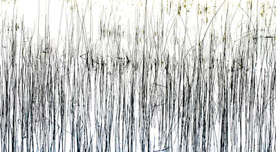 Bill Jackson, 'Twombly in the Reeds', 2014