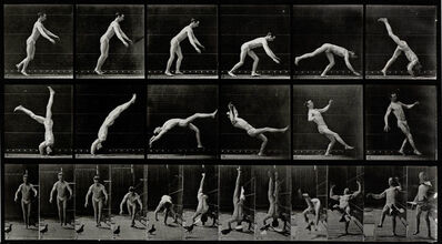 Eadweard Muybridge, 'Plate 365. Head-spring, a flying pigeon interfering.', 1887
