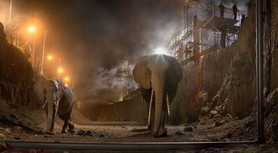 Nick Brandt, 'River Bed with Elephants', 2018