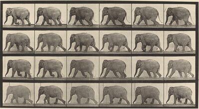 Eadweard Muybridge, 'Animal Locomotion, Plate 733', 1887
