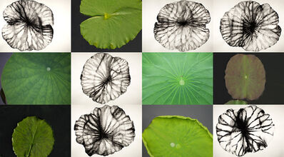 Barbara Edelstein, 'Reflections • Nature: Lotus', 2018