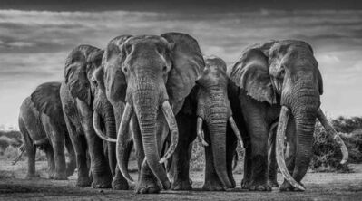 David Yarrow, 'The Pack', 2019