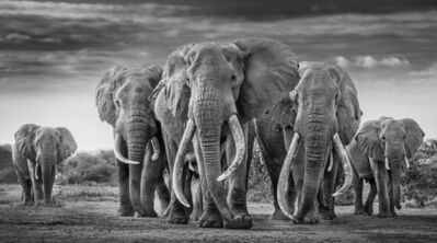 David Yarrow, 'The Mob', 2019