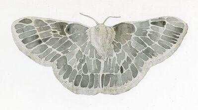 Jim Holyoak, 'Emerald Moth (Cut Out)', year unknown