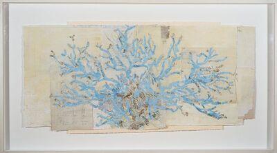 Raine Bedsole, 'Blue Coral Study'
