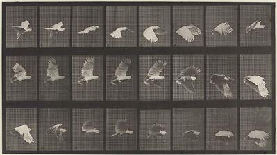 Eadweard Muybridge, 'Animal Locomotion, Plate 758', 1887