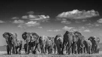David Yarrow, 'Elephant Uprising ', 2016