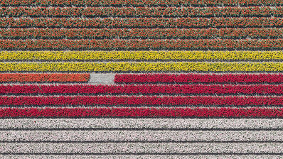 Bernhard Lang, 'Aerial Views, Tulip Fields 23', 2016