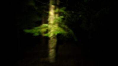 Simone Cametti, 'Documentazione, Bosco Monte di Mezzo, Parco Nazionale dei monti della Laga e Gran Sasso,  Orientamento', 2021