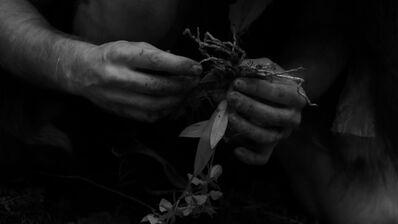 Ulrik Heltoft, 'The Orgin of Specimen 52v', 2013