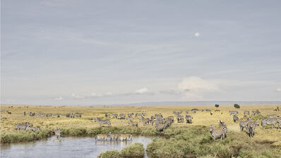 David Burdeny, 'Zebras at Watering Hole, Maasai Mara, Kenya', 2019
