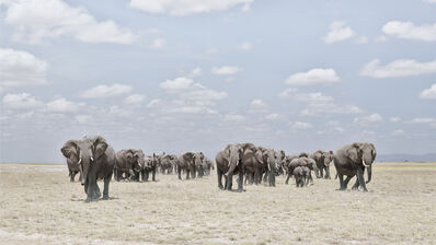David Burdeny, 'Elephants Crossing Dusty Plain, Amboseli, Kenya', 2019