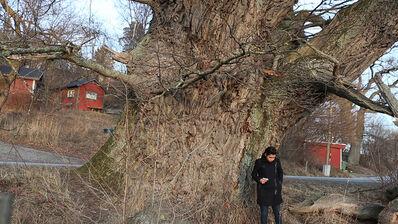 Elmas Deniz, 'The Tree I Want to Buy', 2014