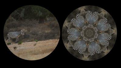 Leslie Thornton, 'Zebra', 2010