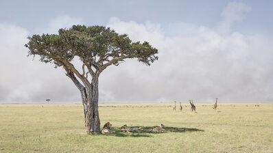 David Burdeny, 'Paradise, Maasai Mara, Kenya, Africa', 2019