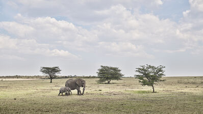 David Burdeny, 'Elephant Mother and Calf, Maasai Mara, Kenya', 2019