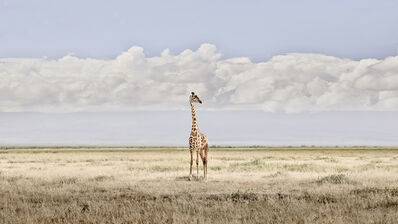 David Burdeny, 'Head in the Clouds, Amboseli, Kenya', 2019