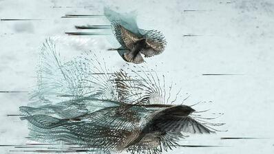 Dennis Hlynsky, 'Sparrows'