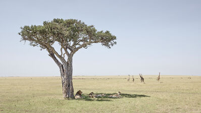 David Burdeny, 'Paradise, Maasai Mara Kenya', 2018