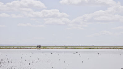 David Burdeny, 'Elephant on the horizon, Amboseli, Kenya, Africa', 2019