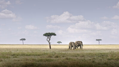 David Burdeny, 'Elephant Pair, Amboseli, Kenya, Africa', 2019
