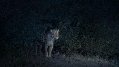 David Burdeny, 'Nocturne Lioness, Maasai Mara, Kenya', 2019