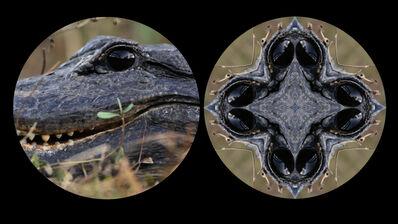 Leslie Thornton, 'Alligator', 2010