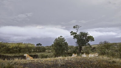 David Burdeny, 'Lioness and Four Cubs River's Edge, Maasai Mara, Kenya', 2019